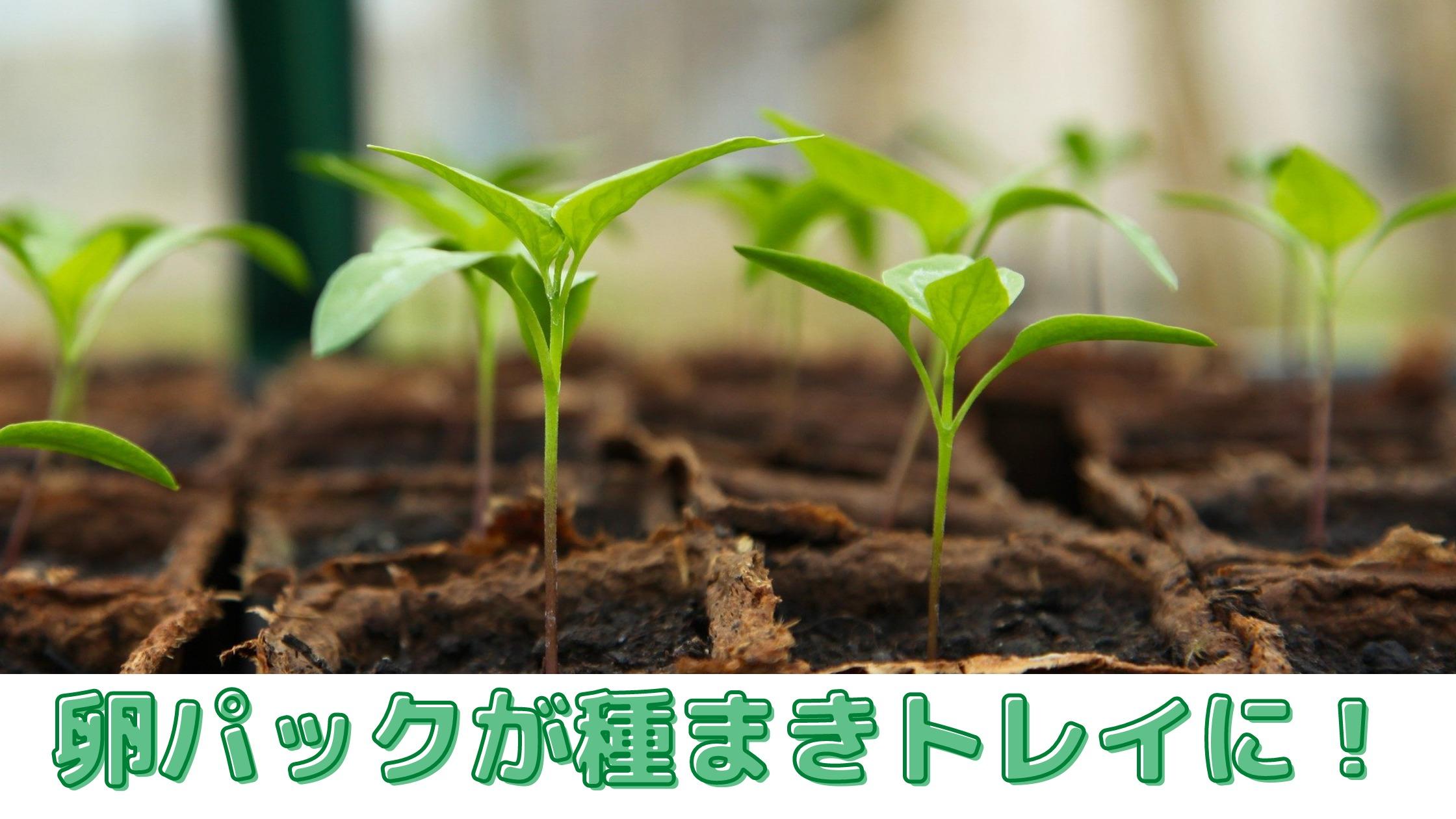家庭菜園での種まきトレイの代用は【卵パック】を再利用・リサイクル